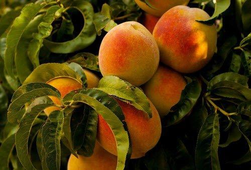 Peaches & Raspberries in White Wine